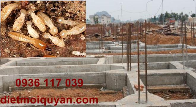 phương pháp diệt mối cho công trình xây dựng tại đồng nai
