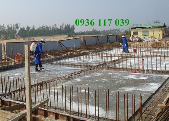 Phòng chống mối cho công trình xây dựng tại long an